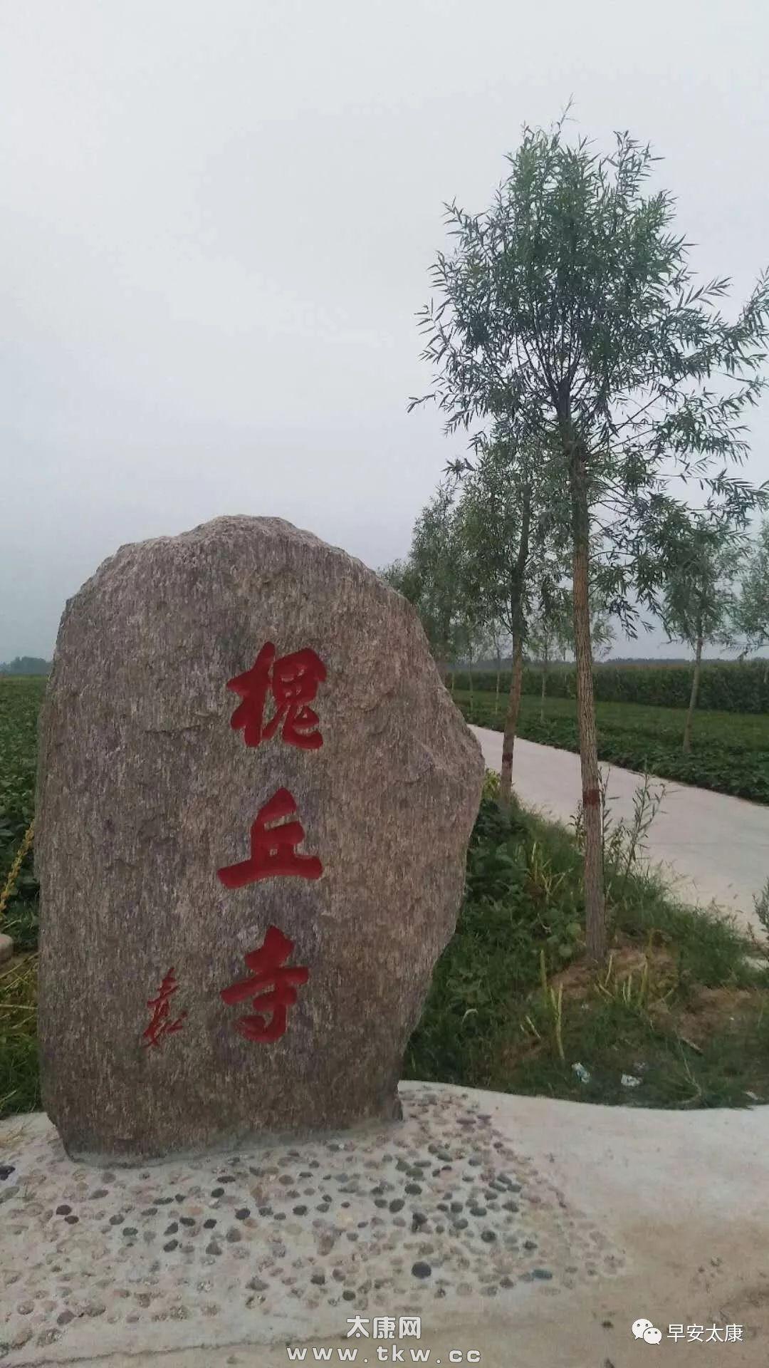 【走近】太康这个村具有六千年文明史,夏朝第八代国王葬于此……