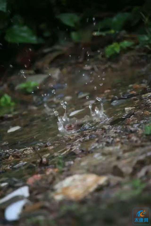 雨天 麻雀