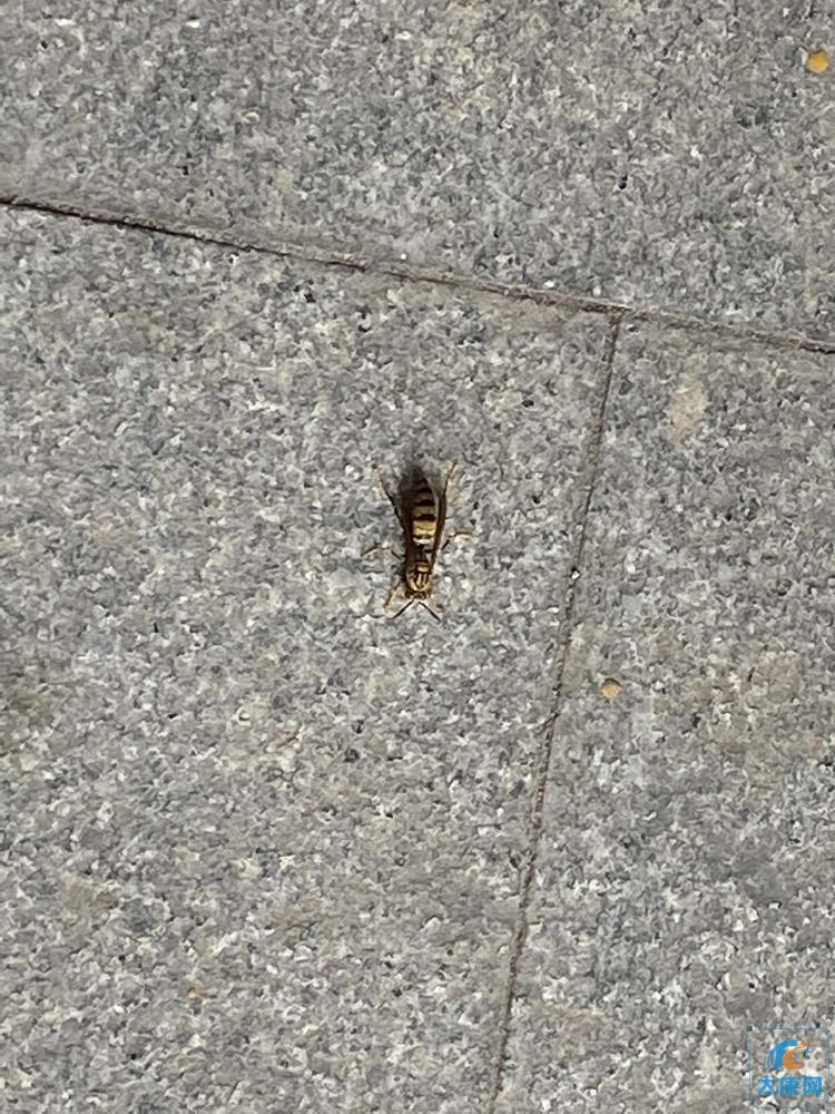 吓人!这个超级大的虫子是啥?有认识的吗!